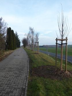 Neue Bäume in Adendorf
